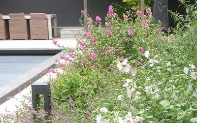 Tuin van het Jaar 2016 – Nominatie  B&C Hoveniers