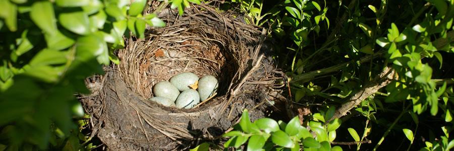 Help broedende vogels in je tuin
