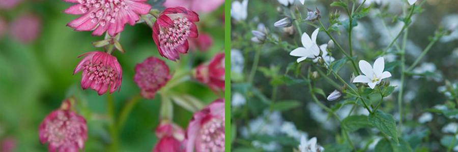 Witte Vaste Planten.Elk Seizoen Kleur Met Bloeiende Vaste Planten Tuinkeur