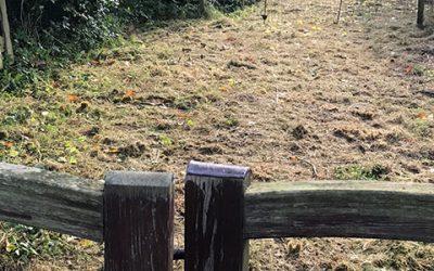 Hoveniersbedrijf Bastiaan Paardekooper in actie voor Hovenier Helpt