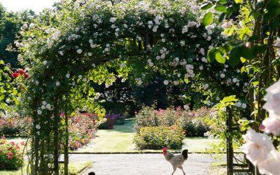 Rozen: Sieraden voor je tuin