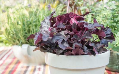 Top 10 groenblijvende planten voor een heerlijk buitenseizoen