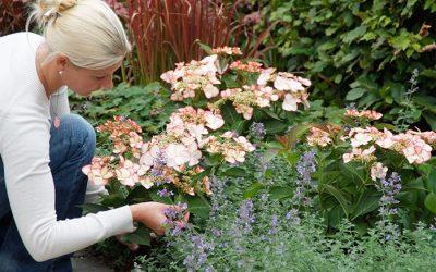 Herfst? Super leuk met vaste planten