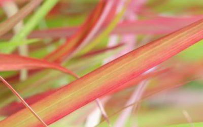 Vurige gekleurde borderplanten