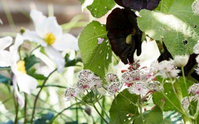 Bijenvrienden: tuinplanten van de maand juli 2019