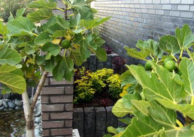 Patio tuin aangelegd door Roelofs Tuinen en Planten (2)
