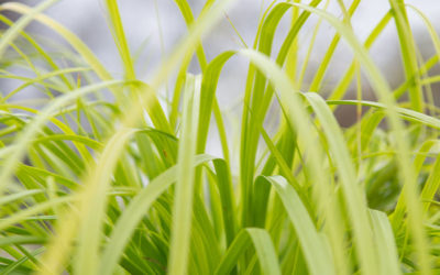 Laat siergrassen ritselen in de romantische tuin