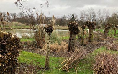 Blog: In de tuin van Jelle: Knotwilg