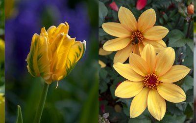 Zomerbollen met gele bloemen voor een vrolijke tuin