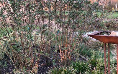 Blog: In de tuin van Jelle: Creëren van een vlinderparadijs