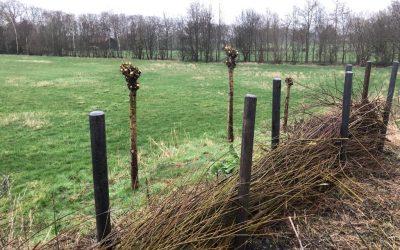 Blog: In de tuin van Jelle: Takkenril