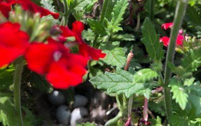 Blog: In de tuin van Jelle: Diversiteit