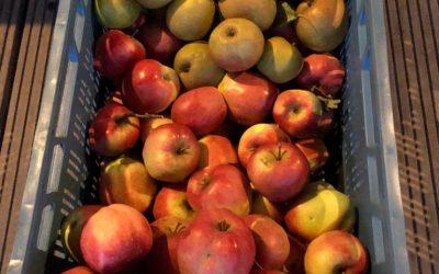 Blog: In de tuin van Jelle: Najaar is ook oogsten