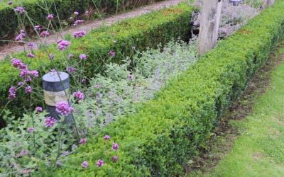Blog: In de tuin van Jelle: Mot met de Buxus