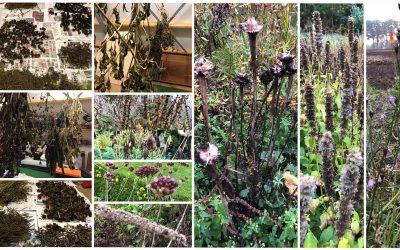 Blog: In de tuin van Jelle: Zaden verzamelen