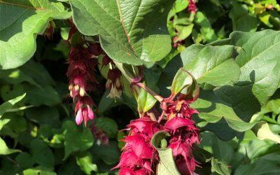 Blog: In de tuin van Jelle: Vermeerderen
