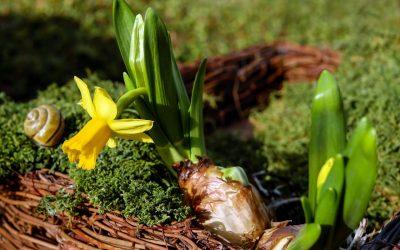 Advies van Lieuwe: Bloembollen in de tuin