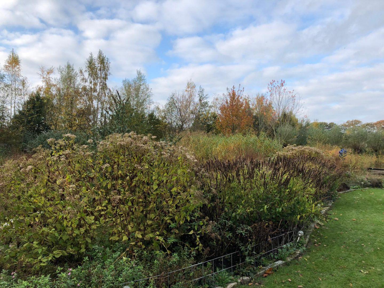 Blog: In de tuin van Jelle: Herfst brengt kleur in je tuin