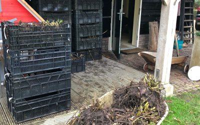Blog: In de tuin van Jelle: Dahlia's erin, Dahlia's eruit