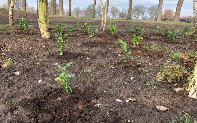 Blog: In de tuin van Jelle: Volop plantseizoen