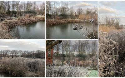 Blog: In de tuin van Jelle: Winter Tuin