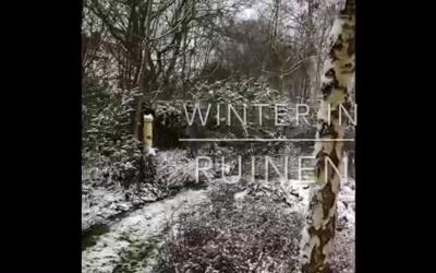 Blog: In de tuin van Jelle: Een winterwandeling in de tuin