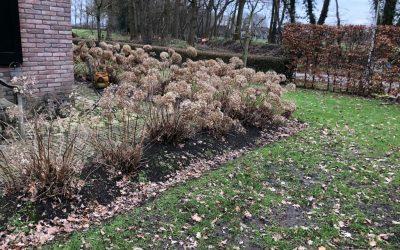 Blog: In de tuin van Jelle: Voorjaar is ook snoeien