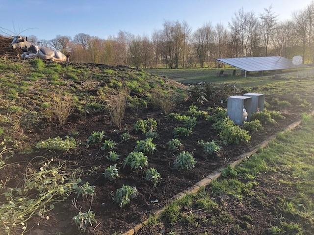 Blog: In de tuin van Jelle: Afscheid nemen van de dahlia's