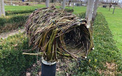 Blog: In de tuin van Jelle: Elke vogel zijn eigen nest